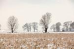 Europa, DEU, Deutschland, Nordrhein Westfalen, NRW, Rheinland, Niederrhein, Voerde, Naturschutzgebiet Momm-Niederung, Winter, Schnee, Typische Kopfweiden, Kategorien und Themen, Natur, Umwelt, Landschaft, Jahreszeiten, Stimmungen, Landschaftsfotografie, Landschaften, Landschaftsphoto, Landschaftsphotographie, Naturschutz, Naturschutzgebiete, Landschaftsschutz, Biotop, Biotope, Landschaftsschutzgebiete, Landschaftsschutzgebiet, Oekologie, Oekologisch, Typisch, Landschaftstypisch, Landschaftspflege....[Fuer die Nutzung gelten die jeweils gueltigen Allgemeinen Liefer-und Geschaeftsbedingungen. Nutzung nur gegen Verwendungsmeldung und Nachweis. Download der AGB unter http://www.image-box.com oder werden auf Anfrage zugesendet. Freigabe ist vorher erforderlich. Jede Nutzung des Fotos ist honorarpflichtig gemaess derzeit gueltiger MFM Liste - Kontakt, Uwe Schmid-Fotografie, Duisburg, Tel. (+49).2065.677997, ..archiv@image-box.com, www.image-box.com]