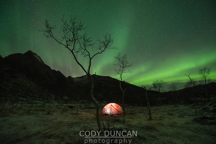 Northern lights shine over tent in frozen winter landscape, Vesterålen, Norway