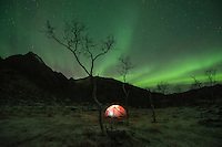 Northern lights shine over tent in frozen winter landscape, Vesterålen, Norway