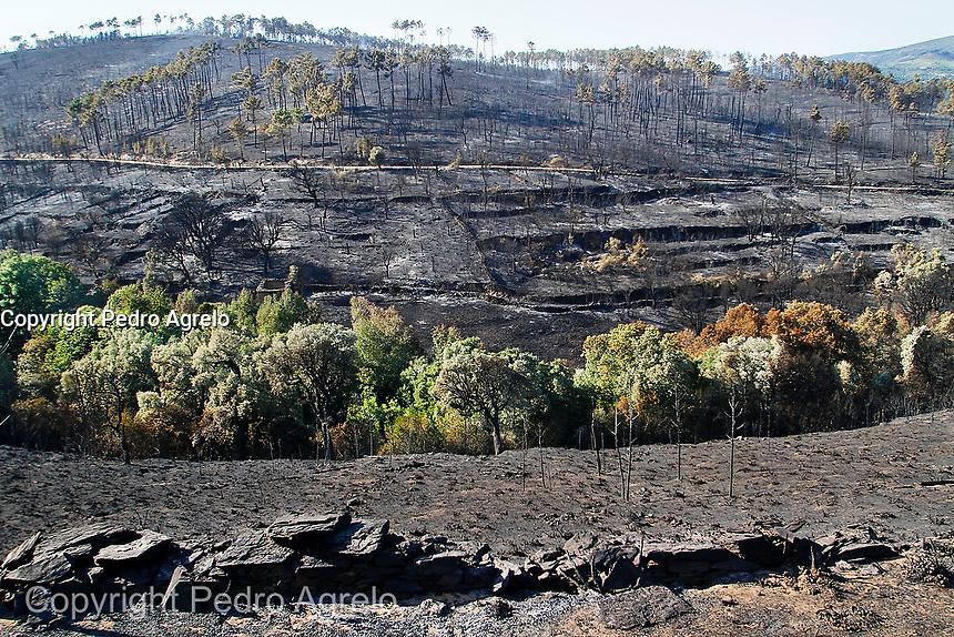 Fecha: 12-08-2013. (Seadur, Larouco Ourense) Incendio forestal, 500 hectáreas ardidas, hubo perdidas en viñedos