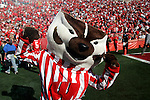 MADISON, WI - OCTOBER 2: Mascot Bucky Badger of the University of Wisconsin celebrates a victory against the University of Illinois at Camp Randall Stadium on October 2, 2004 in Madison, Wisconsin. Wisconsin beat Illinois 24-7. (Photo by David Stluka) *** Local Caption *** Bucky Badger