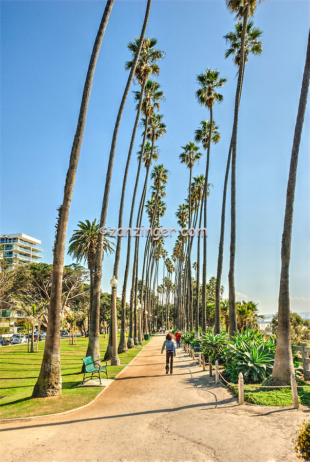 Walking with Palm Trees
