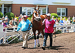 Maximum Security schools in the paddock at Monmouth Park in Oceanport, New Jersey on Saturday May 18, 2019 with Assistant Trainer Jose Hernandez (L) and Groom Milton Hernandez (R). Photo By Bill Denver/EQUI-PHOTO