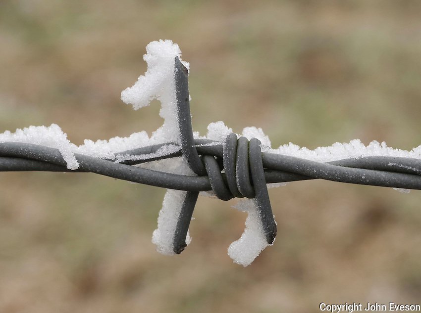 Frost on barbed wire.