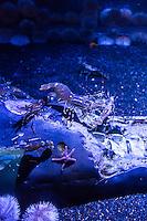 Aquarium of the Pacific, Long Beach, California. Greater Los Angles area.