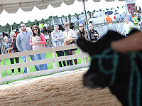 Spectators watch the livestock competition during A Day at Del Val University Saturday April 23, 2016 in Doylestown, Pennsylvania. (Photo by William Thomas Cain)
