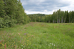 Wild Meadow Field, near Hiidenportti National Park, Finland, in Sotkamo in the Kainuu region