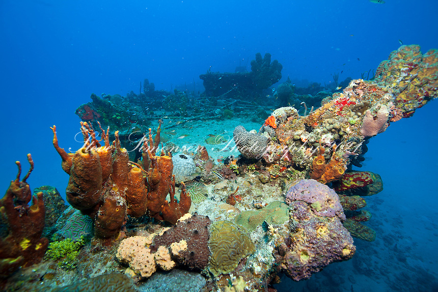 Reef growing on<br /> The Suffolk Maid tug boat, Butler Bay, St. Croix<br /> U.S. Virgin Islands