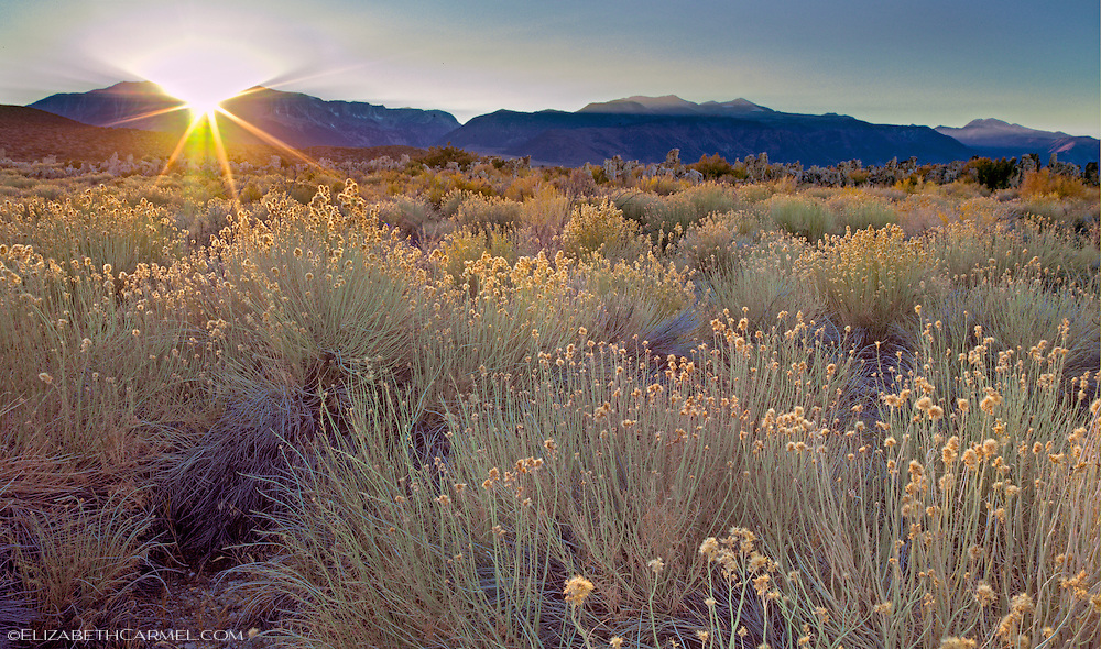 Sunset over Sagebrush