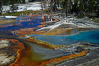 Colorful Paint Pots at Yellowstone National Park.