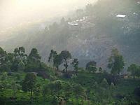 Tea gardens on Munnar hills