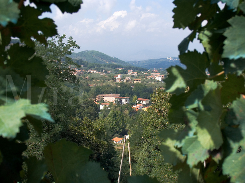 View through grape leaves to homes on hillside in Castelvecchio, Tuscany, Ital