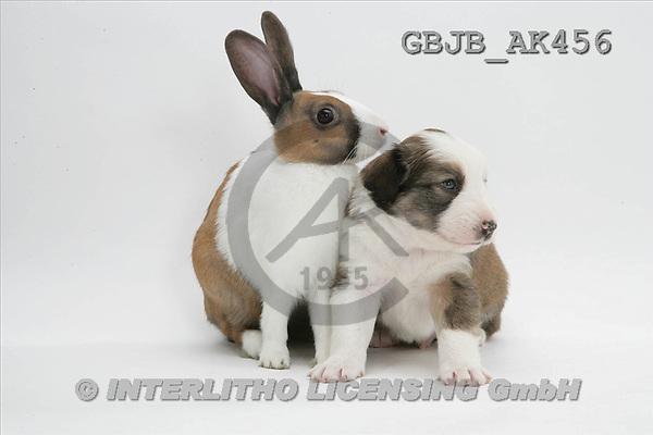 Kim, ANIMALS, fondless, photos(GBJBAK456,#A#) Tiere ohne Fond, animales sind fondo
