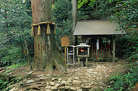 A Shinto shrine in the up on Mount Kurama is there to honor the spirit, or kami, of a giant Cryptomeria tree.