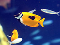 Valentine's Day events at Sunshine Aquarium