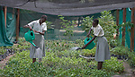Students irrigate the vegetable garden of the Loreto Girls Secondary School in Rumbek, South Sudan. The school is run by the Institute for the Blessed Virgin Mary--the Loreto Sisters--of Ireland.