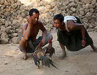 The owners of two cocks in the village of Yandabo on the Irrawaddy River in Myanmar watch intently as they fight. As is the practice in cockfights all over the world, one of the owners is spitting at his bird to cool it off and freshen it up.