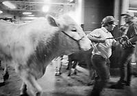 Calgary Stampede 1996.<br /> Foto: Jens Panduro Sort/hvide billeder taget under Calgary Stampede i 1996. <br /> Calgary Stampede er et &aring;rligt rodeo, udstilling og festival holdt hver juli i Calgary, Alberta, Canada. Den ti-dages begivenhed, som regner sig som &quot;Det st&oslash;rste udend&oslash;rs show p&aring; jorden&quot;, tiltr&aelig;kker over en million bes&oslash;gende om &aring;ret og har en af verdens st&oslash;rste rodeoer, en parade, sceneshows, koncerter, dyrskue og landbrugskonkurrencer.