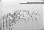The completed fly net which is stationed on the rocks at Boddin, Angus viewed at high tide and has just been constructed by a team of five salmon netters.<br /> Ref. Catching the Tide 29/00/16 (6th May 2000)<br /> <br /> The once-thriving Scottish salmon netting industry fell into decline in the 1970s and 1980s when the numbers of fish caught reduced due to environmental and economic reasons. In 2016, a three-year ban was imposed by the Scottish Government on the advice of scientists to try to boost dwindling stocks which anglers and conservationists blamed on netsmen.