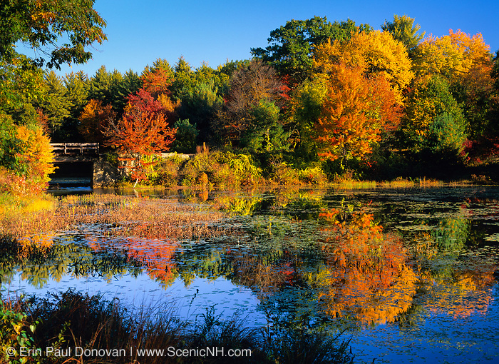 Fall foliage around Clarks Pond in Auburn, New Hampshire USA.
