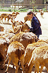 Young girl feeding animals at the West Coast Game Park Bandon Oregon State USA..