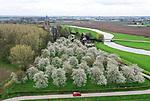 Foto: VidiPhoto<br /> <br /> ZOELEN &ndash; Ruim twee weken eerder dan vorig jaar, staan grote delen van de Betuwe nu al in bloei, zoals hier de hoogstam-kersenboomgaard naast de Linge in Zoelen. Naast kersen, bloeien ook de pruimenbomen al volop en staan perenbomen op het punt om in bloei te schieten. Oorzaak van de vroege bloesempracht is de korte winter. In februari werden al temperaturen tussen de 15 en 20 graden Celsius bereikt en van nachtvorst is tot nog toe nauwelijks sprake geweest. Fruittelers verwachten hierdoor ook een vroege oogst.