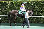 Daimei Princess (Shinichiro Akiyama), AUGUST 19, 2018 - Horse Racing : Daimei Princess ridden by Shinichiro Akiyama before the TV Nishinippon Corp.Sho Kitakyushu Kinen at Kokura Racecourse in Fukuoka, Japan. (Photo by Eiichi Yamane/AFLO)