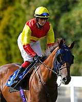 Relight my Fire ridden by Emily Easterby goes down to the start of The Mercedes-Benz of Salisbury Handicap (For Lady Amateur Riders)   during Twilight Racing at Salisbury Racecourse on 14th September 2018