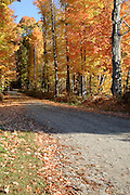 Autumn foliage along a dirt road in Antrim, New Hampshire USA.