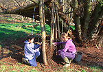 A082R3 Children playing at making den in woods- making a wattle and daub wall