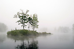 A small island at Tully Lake is engulfed in fog