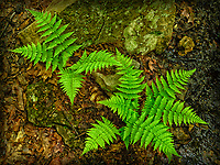 Fern in leaves and wet rocks