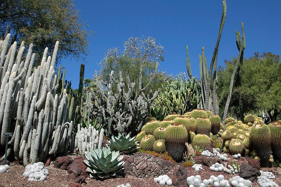 Huntington Gardens, California, USA Desert Garden