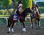 October 27, 2019 : Breeders' Cup Juvenile Fillies entrant Perfect Alibi, trained by Mark E. Casse, exercises in preparation for the Breeders' Cup World Championships at Santa Anita Park in Arcadia, California on October 27, 2019. John Voorhees/Eclipse Sportswire/Breeders' Cup/CSM