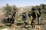 Israeli policemen and Palestinian farmers inspect olive trees destroyed by Israeli settlers from the nearby settlement Eileh, in the West Bank village of Talfit, southern Nablus, March 05, 2014. Palestinian farmers on Wednesday detained an Israeli settler after they caught him chopping down olive trees in their fields in the northern West Bank, an official said. Photo by Nedal Eshtayah
