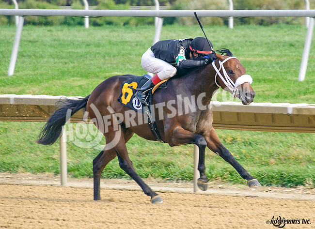 Fifth Avenue Flash winning at Delaware Park on 10/14/15