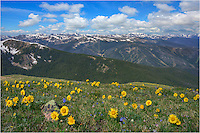 """On a hike to James Peak, one of the the Front Range's 13,000 feet high mountains, I paused to take in the view. From high above town of Winter Park and the Fraser Valley, these golden sunflowers - called """"Old Man of the Mountain"""" reached for the rising sun in the east. In the distance, you can see the Winter Park ski runs. In the far distance is Mount Evans, one of Colorado's 14ers. This Colorado image was taken from the James Peak Trail on a beautiful summer morning."""