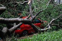 SÃO PAULO,SP,18 FEVEREIRO 2013 -  CHUVA ZONA LESTE  - A forte chuva que caiu na tarde de hoje derrubou  arvore sobre um carro  na pça Sonia Aparecida Lima  zona leste.FOTO ALE VIANNA - BRAZIL PHOTO PRESS.
