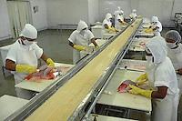 Indústria da pesca.<br /> <br /> Processo de tratamento e embalamento de pescado para exportação.<br /> Produção vinda da costa do Pará e Amapá.<br /> Foto Paulo Santos
