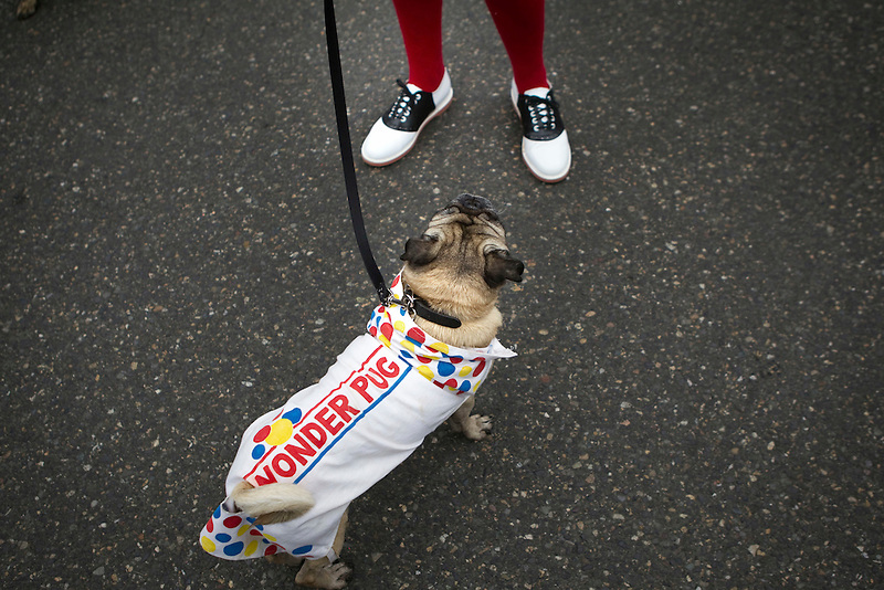 A woman with her pug, who is dressed as Wonder pug, Portland's annual Pug Crawl organized by the Oregon Human Society. The event is expected to be the largest gathering of pugs on the West Coast, attracting an estimated 500 four-legged friends and more than 1,000 people.