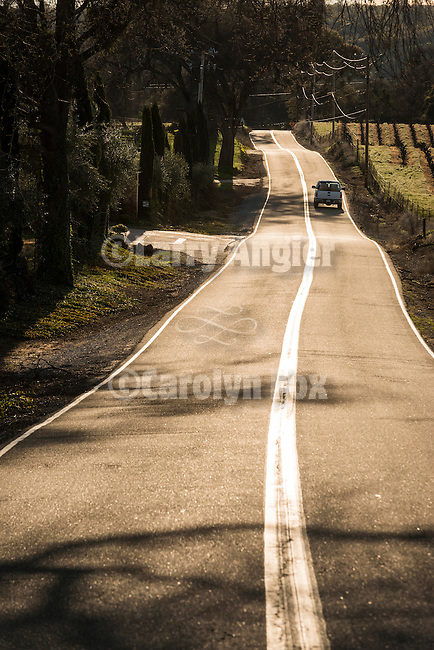 Country road through the vineyards of Amador County's Shenandoah Valley, Calif.