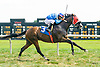 Silent Tale winning at Delaware Park on 8/29/16