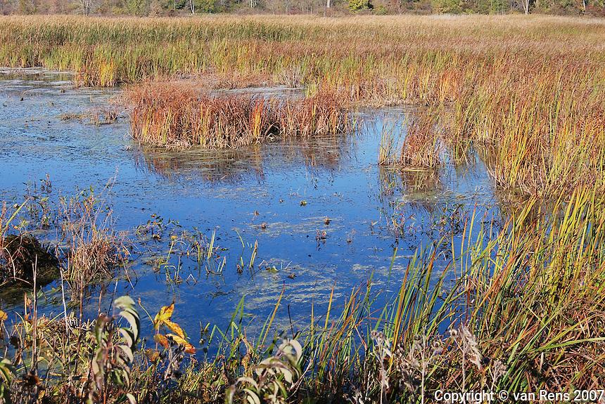 Swamp and Wetlands in Crane Creek Wildlife Refuge on Lake Erie.
