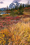 Mount Baker-Snoqualmie National Forest, WA: Grasses, spirea and huckleberries in fall color at Picture Lake with Mount Shuksan at dusk