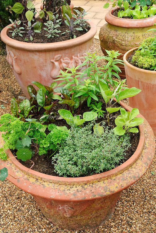 Container Garden In Terracotta Clay Pots With Herbs Thyme, Nasturtium,  Sage, Vegetables Eggplant