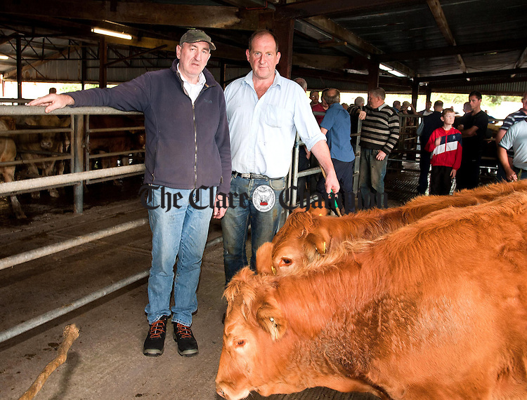 080912.Prize Pair Winners Limousins, (L-R) Kevin Moloney,Broadford (Owner) and Pat Minogue, Clare Marts at Scariff Mart, Scariff Co Clare.