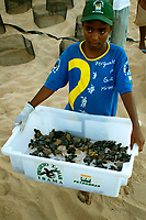 Young volunteer displays bin with loggerhead turtle Caretta caretta hatchlings prior to release into the ocean, Center for sea turtle protection, TAMAR project, Praia do Forte, Bahia, Brazil South Atlantic