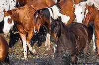 Photo of Cowboy Horses crossing water Photography by Jess Lee Western fine art prints and photographs of the western lifestyle by western photographer Jess Lee.