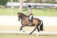Gentleman's Hunter over 15hh