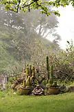 USA, California, Big Sur, Esalen, a Buddha and cactus plants next to the sweat lodge at the Esalen Institute